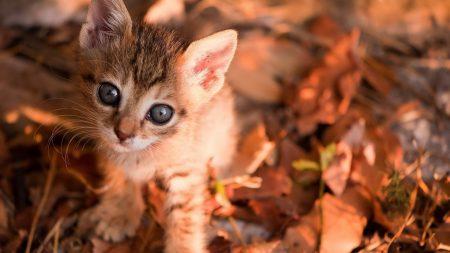 kitten, leaves, muzzle