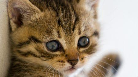 kitten, muzzle, eyes