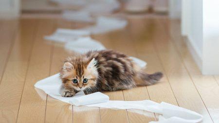 kitten, paper, parquet