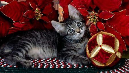 kitten, patterns, lying