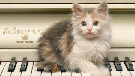kitten, piano, sit