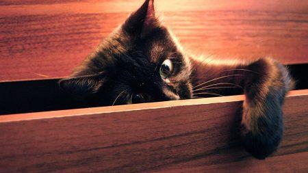 kitten, play, paw
