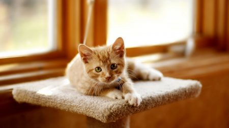 kitten, scratching posts, cat