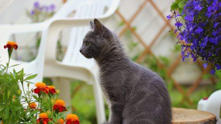 kitten, sitting, dark