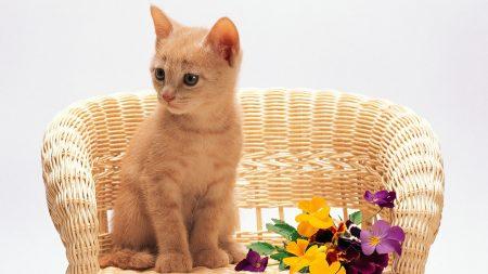 kitten, sitting, flowers