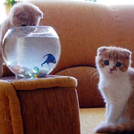 kittens, aquarium, fish
