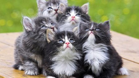 kittens, babies, cute