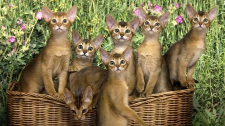 kittens, basket, flowers