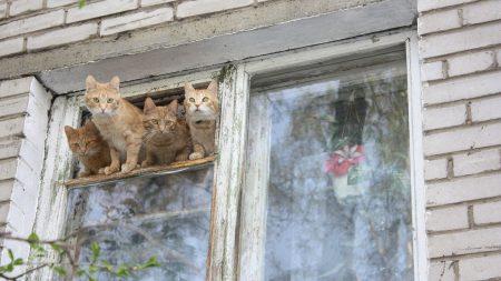 kittens, cats, window