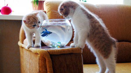kittens, couple, aquarium
