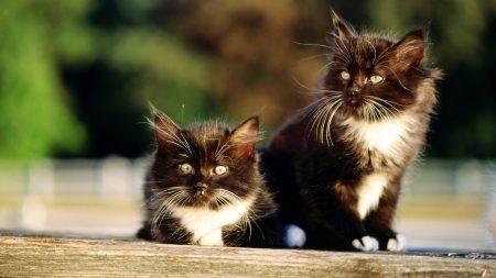 kittens, couple, light