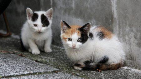 kittens, couple, sitting