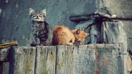 kittens, couple, tree stump