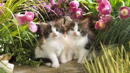 kittens, flowers, couple