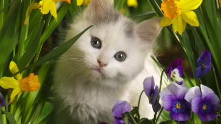kittens, flowers, spotted