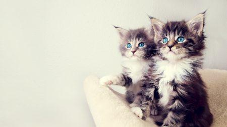 kittens, fluffy, kids