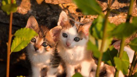 kittens, leaves, couple