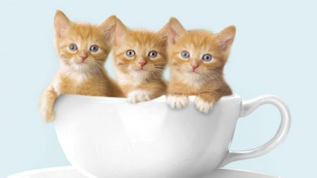 kittens, three cup, sit
