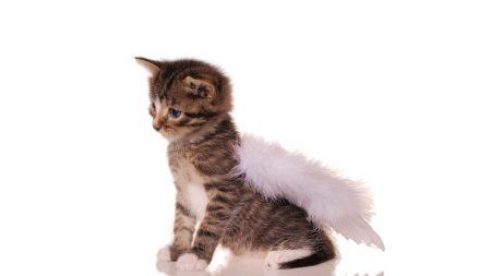kitty, angel, wings