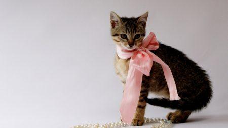 kitty, bow, beads