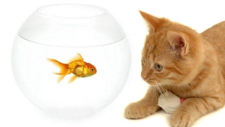 kitty, cat, aquarium