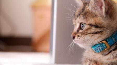 kitty, collar, sit