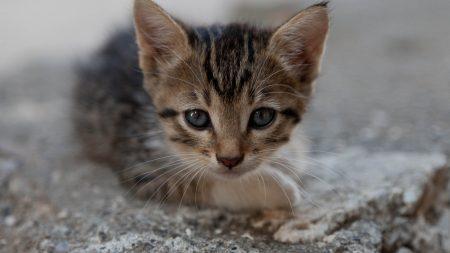 kitty, face, eyes