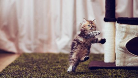 kitty, furry, run