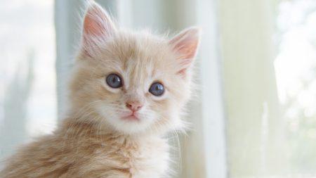 kitty, little, fluffy