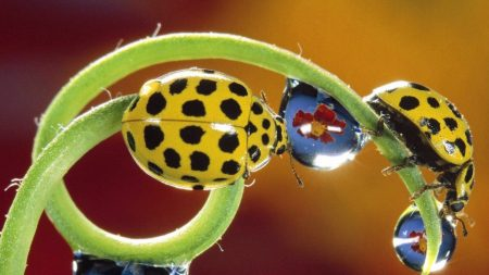 ladybird, color, flower