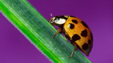 ladybird, color, leaf