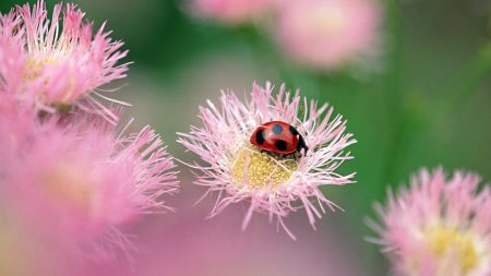 ladybird, flower, insect