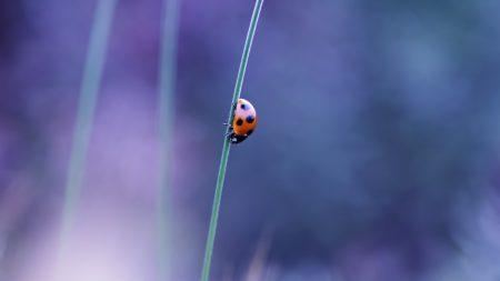 ladybird, grass, glare
