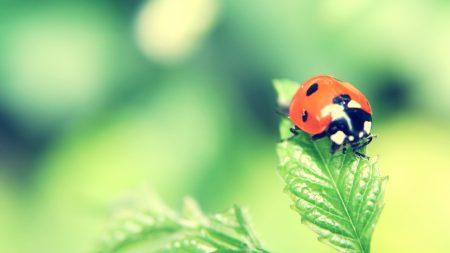 ladybird, grass, plants