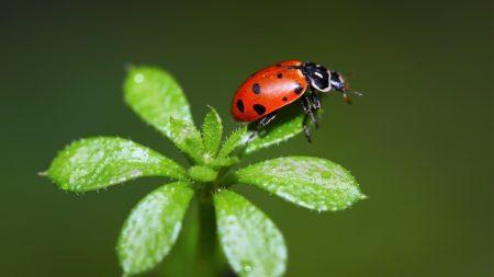 ladybird, grass, stains
