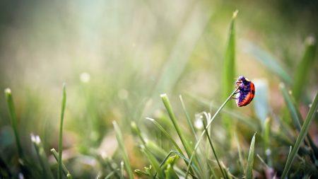 ladybug, grass, glare