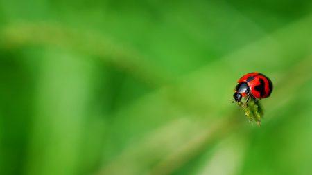 ladybug, grass, surface