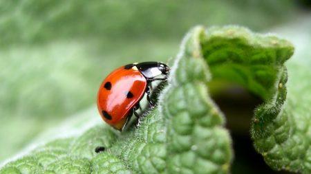 ladybug, leaf, light