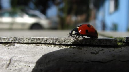 ladybug, stripes, road