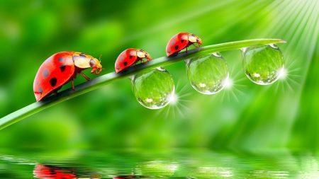 ladybugs, glitter, grass