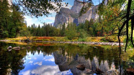 lake, branches, stones