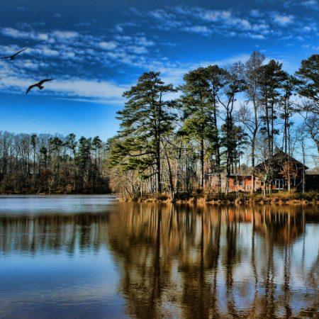 lake, coast, trees