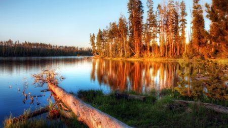 lake, evening, trees