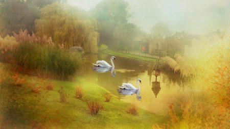 lake, swans, style