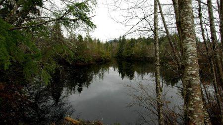 lake, trees, gloomy