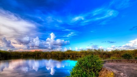 lake, vegetation, greens