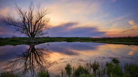 landscape, tree, lake