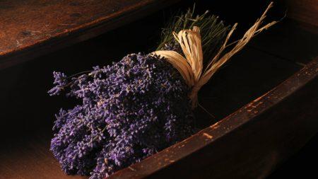 lavender, bouquet, lies