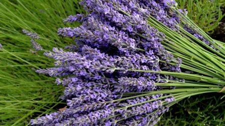 lavender, flowers, bouquets