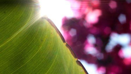 leaf, autumn, dry